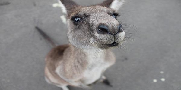 Un ebook gratuito per chi vuole andare in Australia