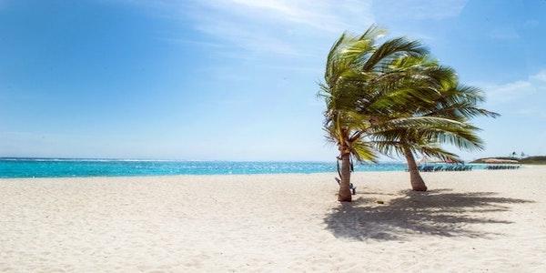 Cercasi cuoco per ristorante ai Caraibi