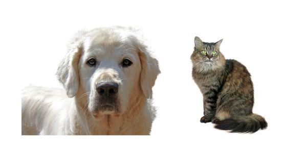 Offerta di lavoro per amanti dei cani e gatti